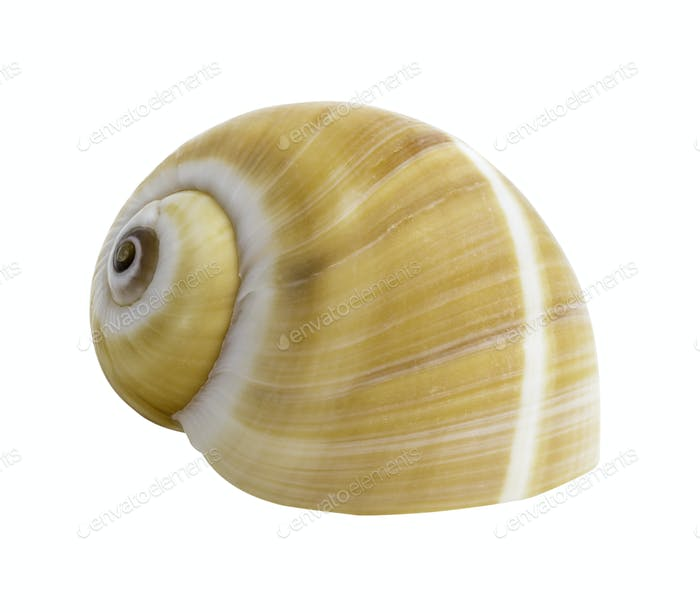 Close up Marine sea shell isolated 5