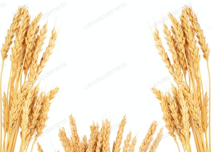 Ähren von Weizen. Rahmen für Design