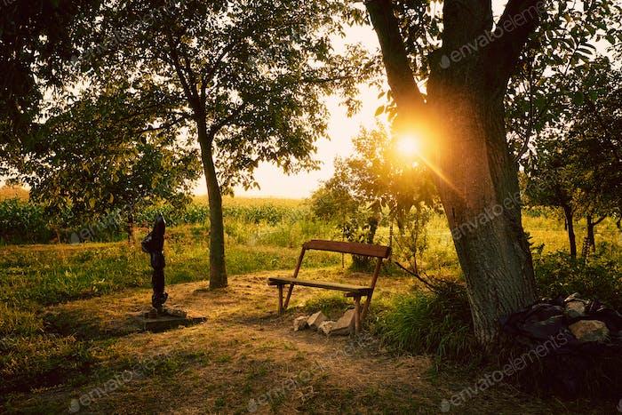 Garden sunrise