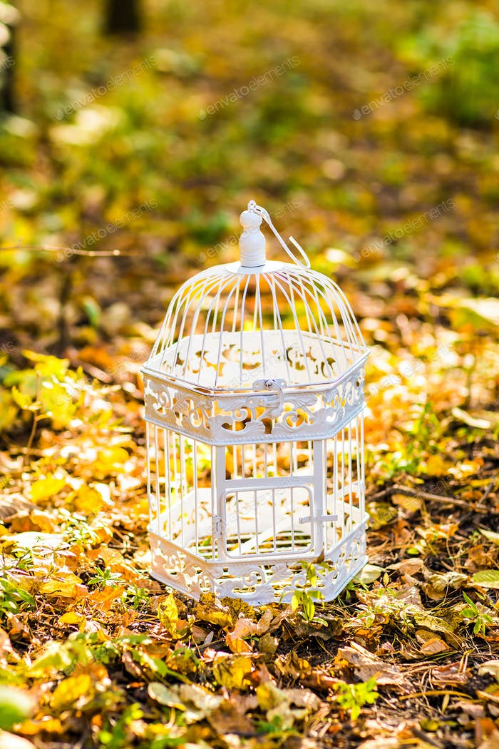 Vintage birdcage in the autumn park
