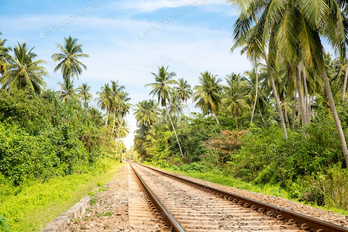 Palm forest across railway road on Sri Lanka