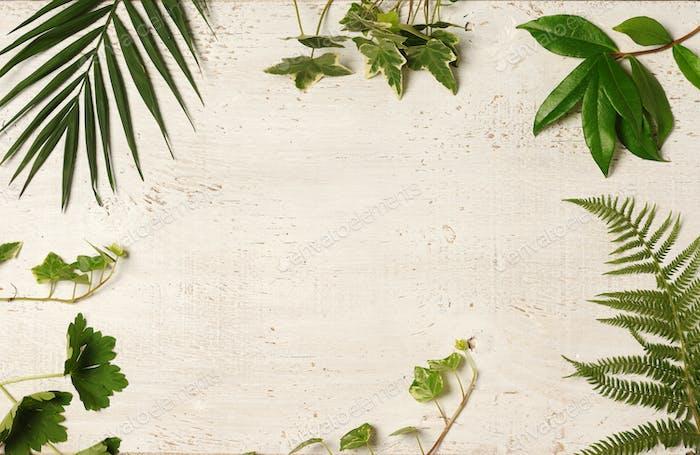 green leaves arrangement