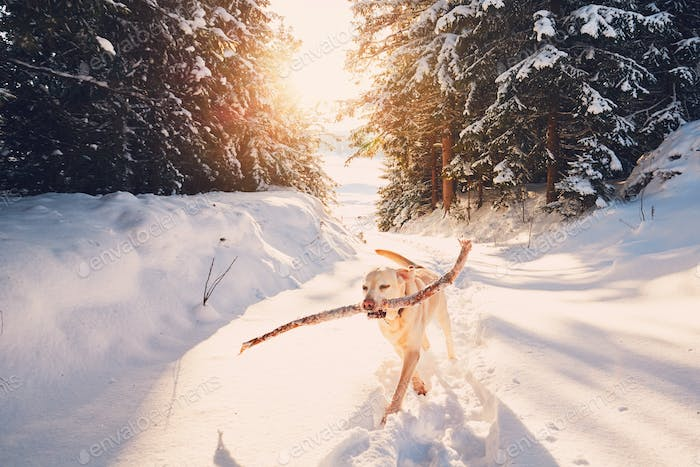 Hund im Winter Natur