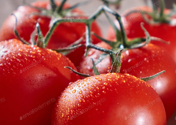 Macro photo of ripe red tomatoes on a branch with drops of water. Healthy vegetable