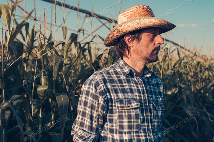 Portrait of serious agronomist in corn field