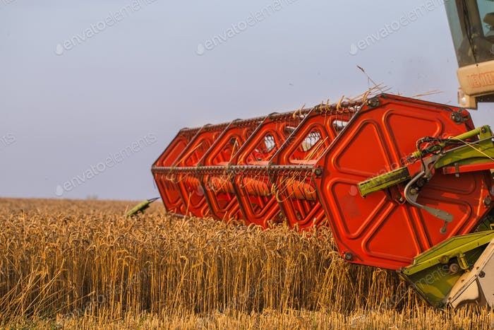 Harvester in wheat field