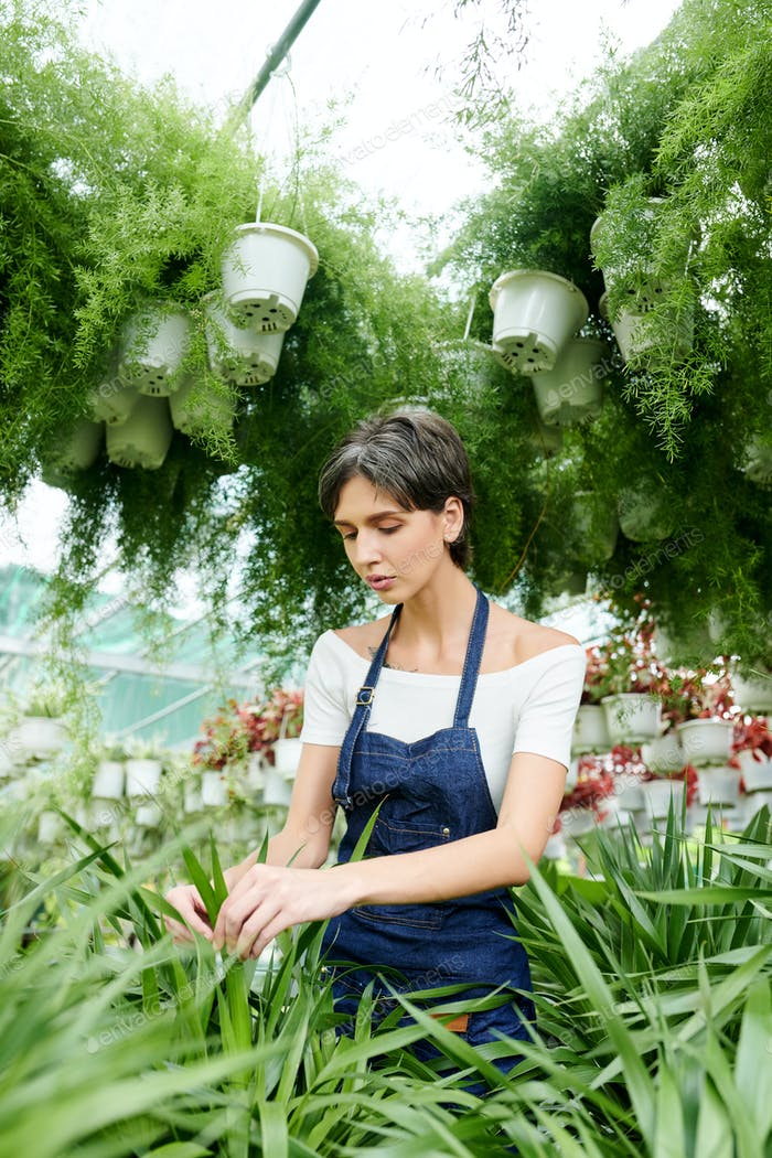 Botanist working in greenhouse