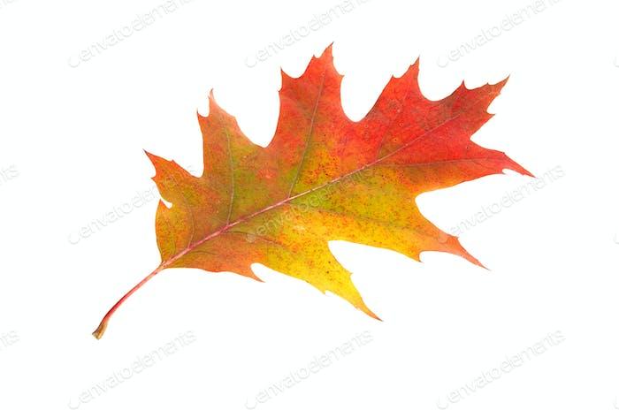 Alone leaf.