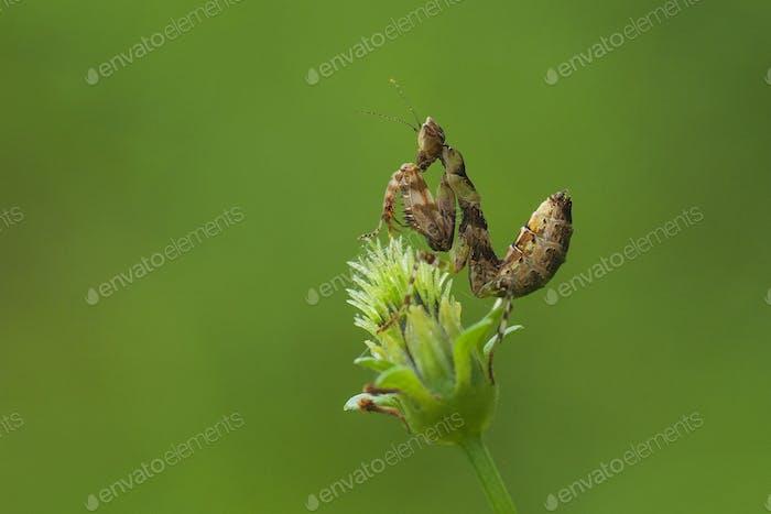 Praying Mantis Sitting on a Flower