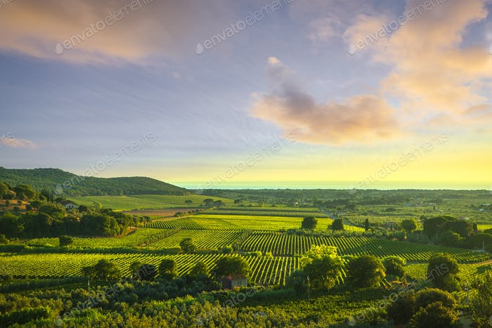 Bolgheri and Castagneto vineyard aerial view on sunset. Maremma