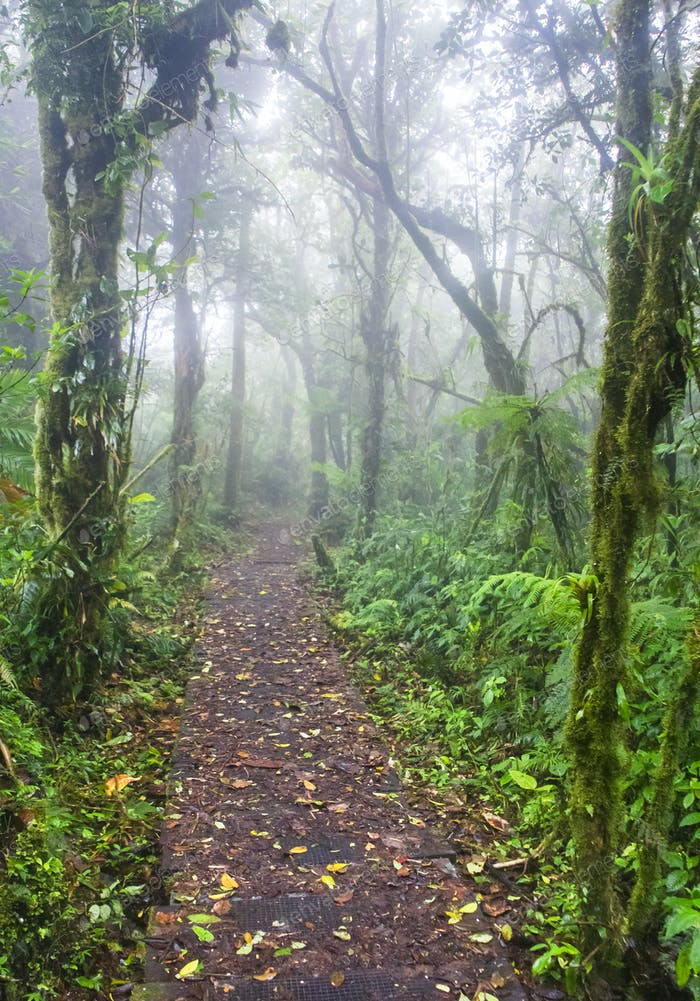 Trail Leading Through Dense Cloud Forest in Costa Rica