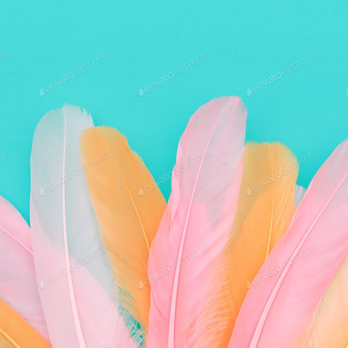 Minimal candy feathers background art gallery
