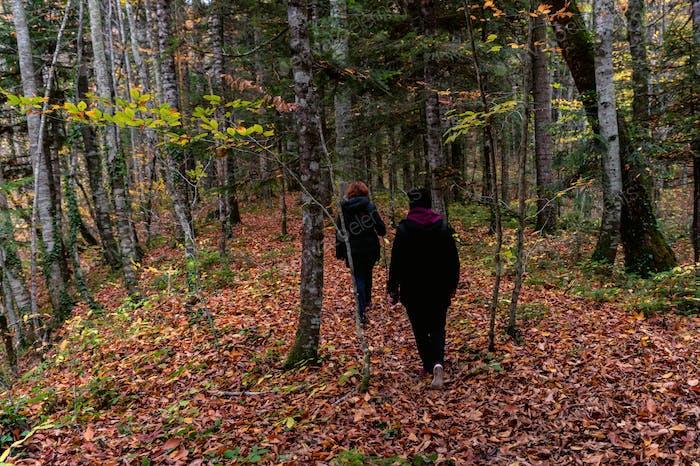 Grupo de viajantes na floresta de outono em um dia nublado