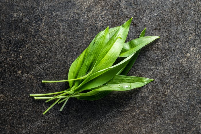 Green wild garlic leaves. Ramsons leaves on black table.
