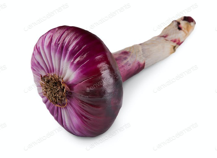 One red onion closeup isolated on white background