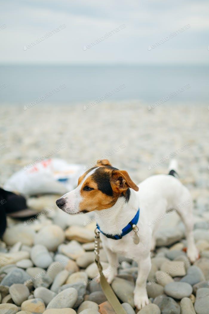Hund im Halsband posiert am Strand