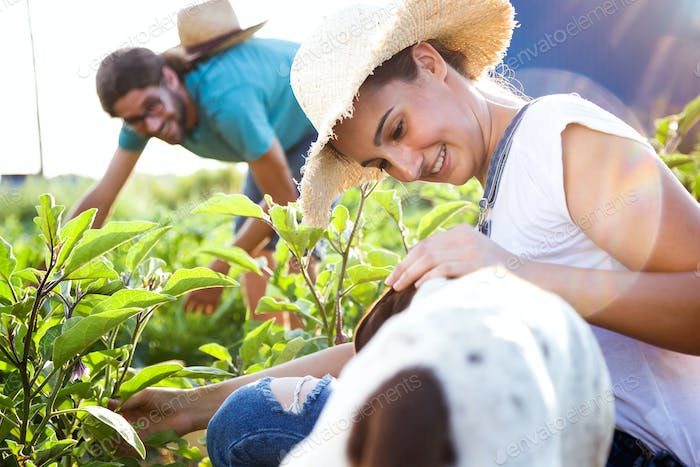 Young horticulturist couple harvesting fresh vegetables with dog