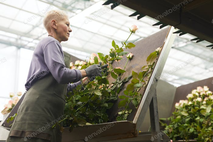 Woman working with roses