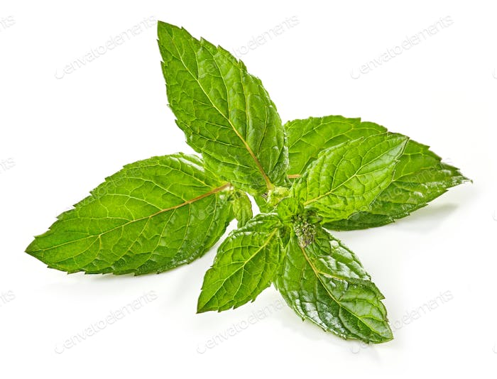fresh green mint leaf