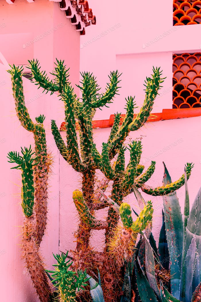 Cacti on pink. Plants on pink concept. Tropical location
