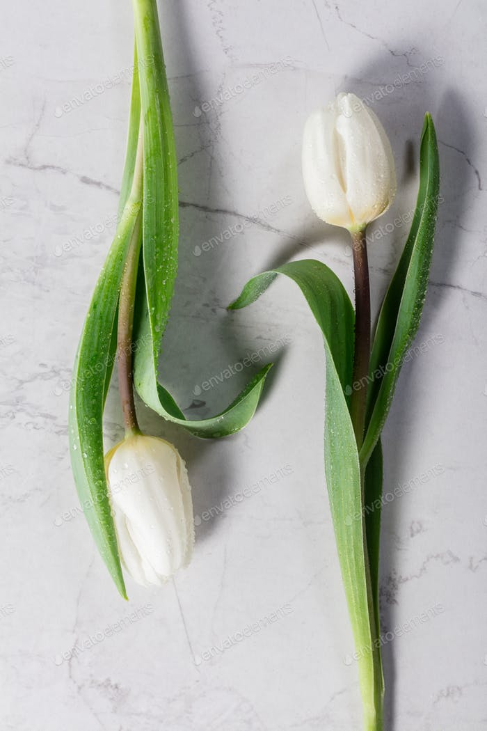 Two white tulips laying on a marble background.