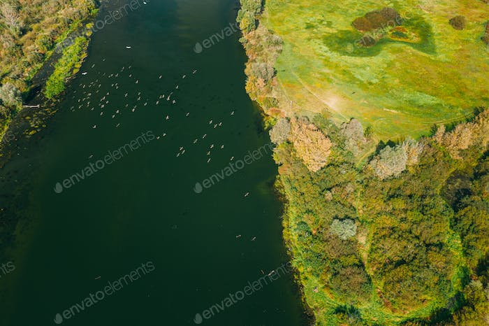 Belarus. Flock Of Heron Birds Flying Above Sozh River. Aerial View Landscape
