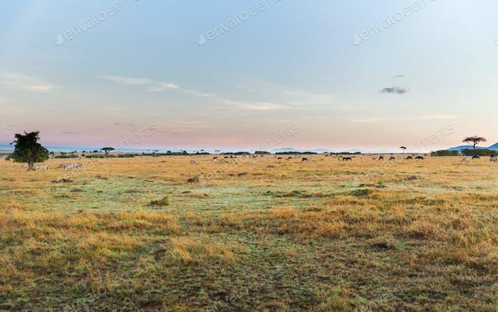 Gruppe von Pflanzenfressertieren in Savanne in Afrika