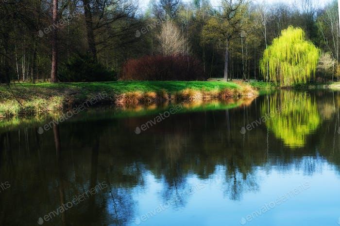 spring scene in the park, reflection in watrer