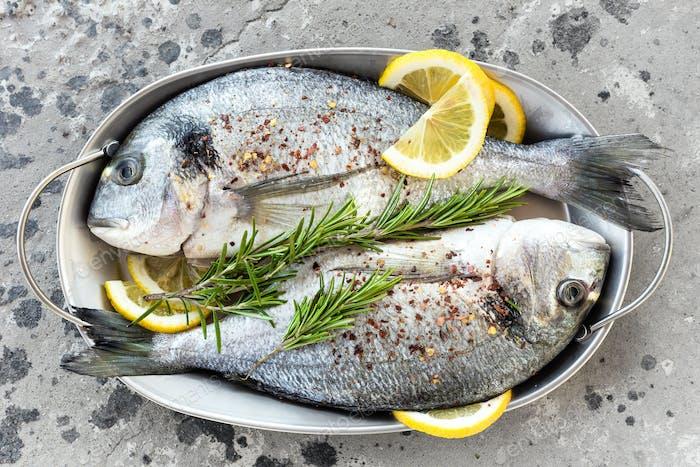 Frischer Fisch Dorado. Roher Dorado-Fisch mit Zitrone und Rosmarin. Seebrassen oder Dorada-Fisch