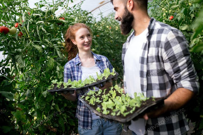 Two young smiling people working in greenhouse with sprouts