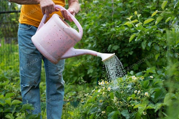 Bewässerung Blumen mit Dose im Garten. Keine Gesichtsansicht.