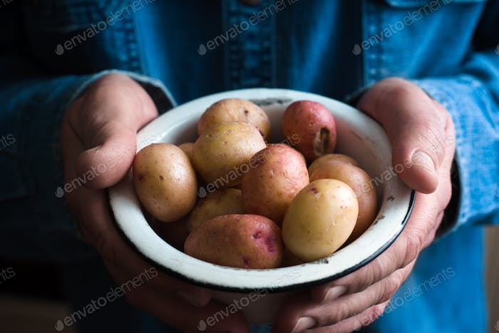 Potatoes in a white bowl in the hands of a man in a blue shirt closeup