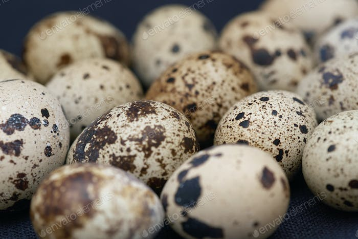 Close-up view on the Quail eggs