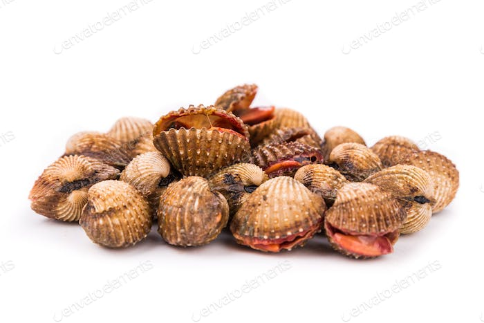 Heap of fresh and living cockles with white background