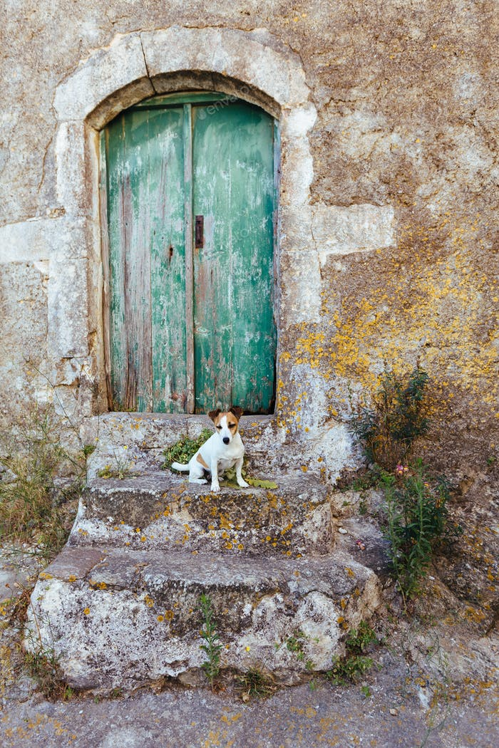 Old door and dog
