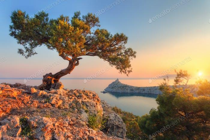 Erstaunlicher Baum wächst aus dem Felsen bei Sonnenaufgang