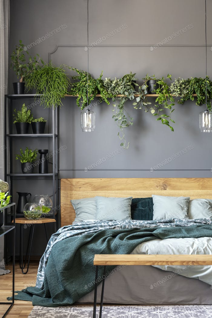 Plant above wooden bed with green blanket in grey bedroom interi