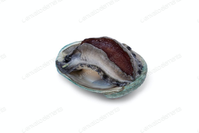 Fresh raw abalone
