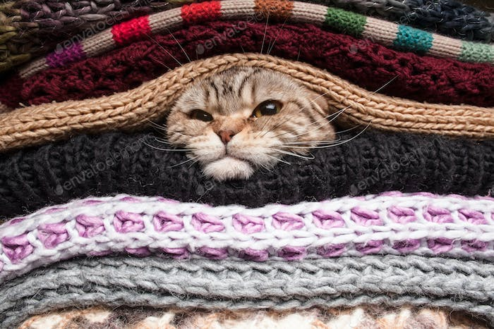 Angry cat is preparing for winter