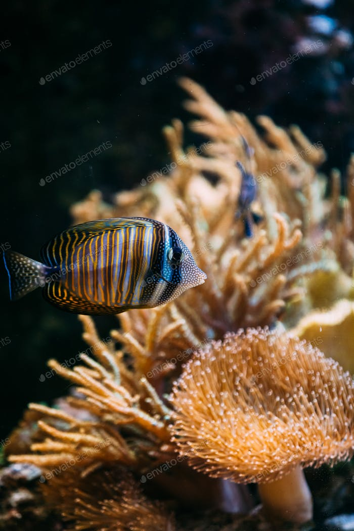 Pescado de Mar coloridos en el acuario