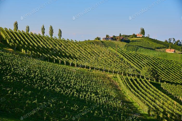Austria Vineyards hills Sulztal an der Weinstrasse south Styria , wine country