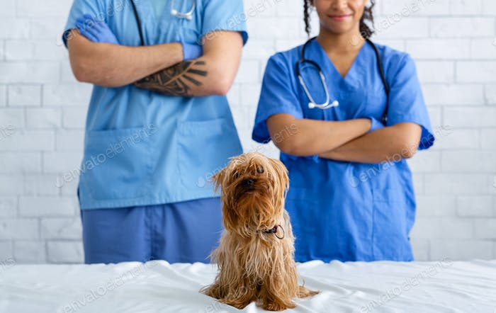 Professional vet doctors with cute little dog in animal clinic, closeup