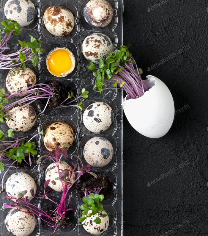 Palette with fresh quail eggs and watercress on a black textured
