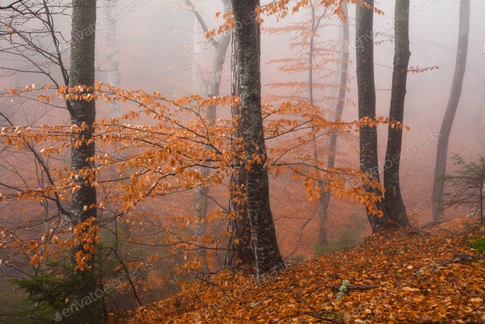 Misty autumn forest in the mountains. Beautiful mystical landscape