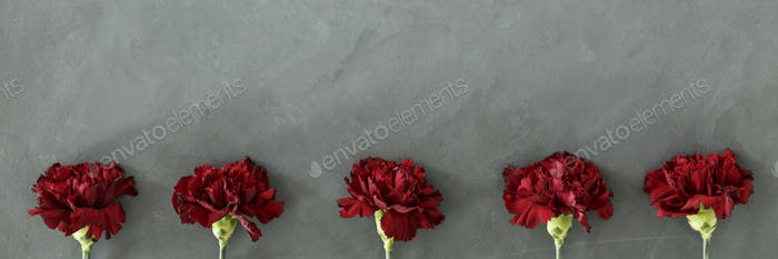 Five fresh burgundy carnation flowers on grey raw background