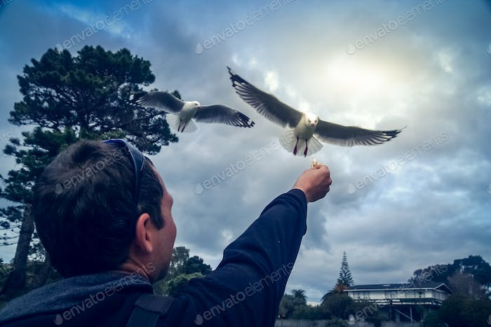 Feeding the seagull