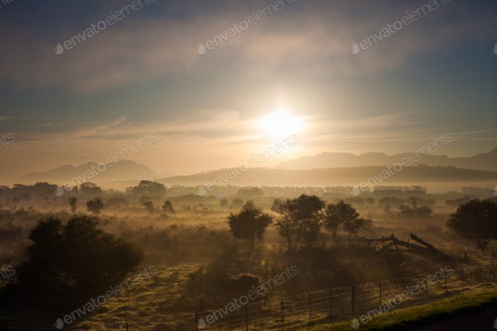 Fields at dawn