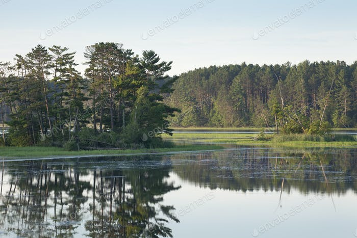 Early Morning View of an Island with Pine Trees in a Northern Minnesota Lake