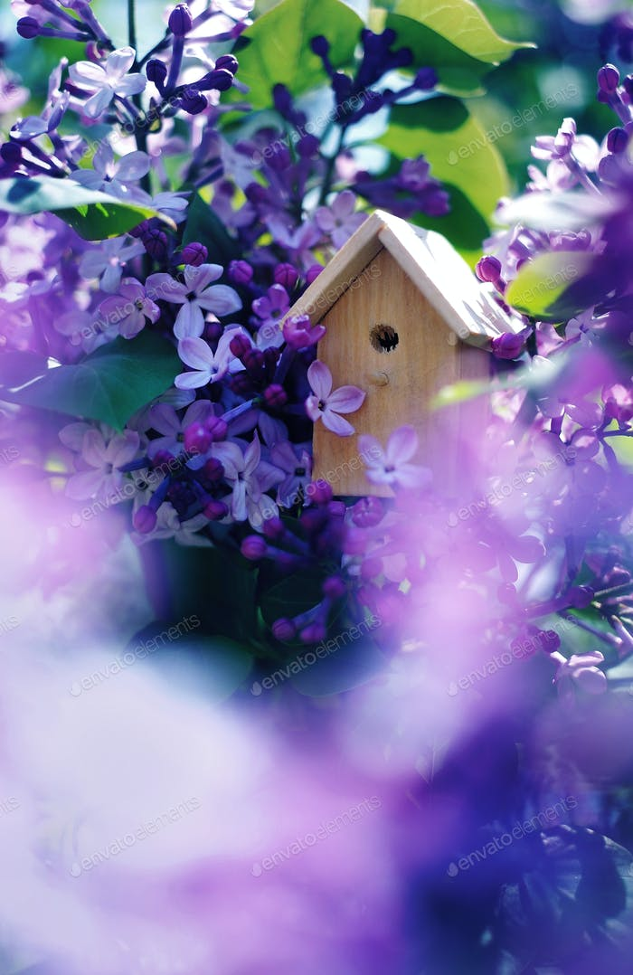 Birdhouse on a blooming lilac tree, tiny nesting box in spring flowers. Creative spring photography
