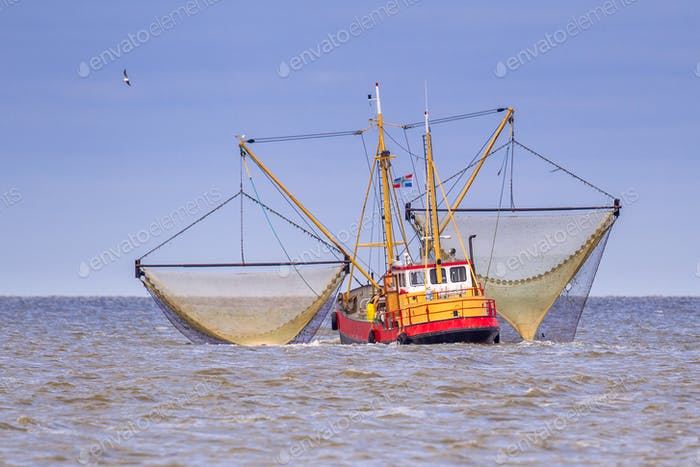 Working Dutch Shrimp fishing cutter vessel